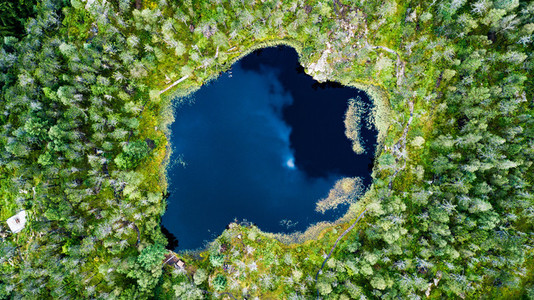 Aerial view of a forest lake
