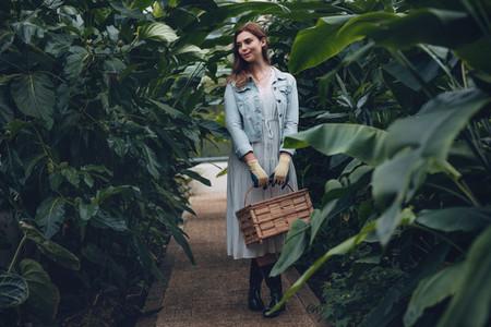 Gardener with basket standing in greenhouse