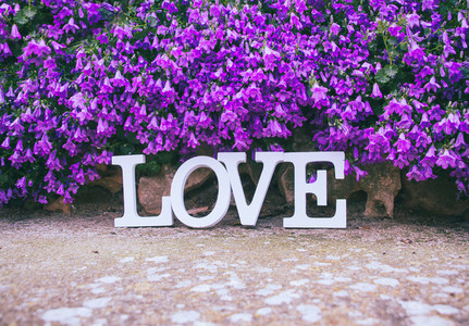 Love word and purple flowers