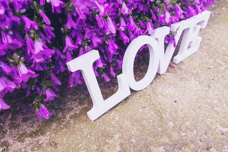 Love word and purple flowers