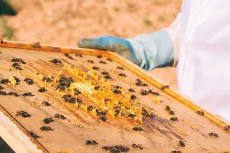 Beekeeper and a honeycomb