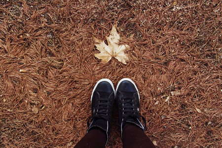 Autumn is come