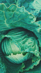 Cabbage texture