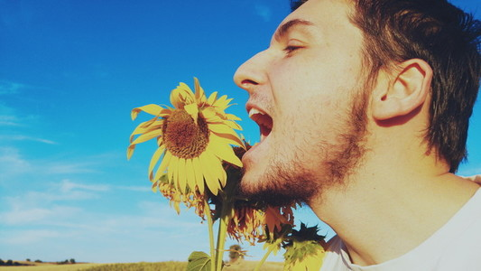 Young man eating a sunflower