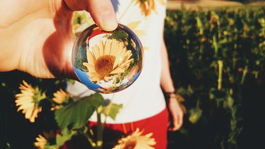 Sunflower through a crystal ball