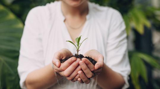 Female gardener hands holding seedling