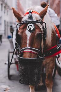 Tourist Walk 36   Horse