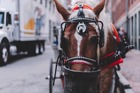 Tourist Walk 37   Horse