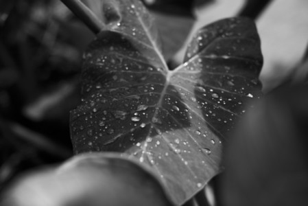 Black and White Leaves 15
