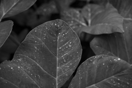 Black and White Leaves 17