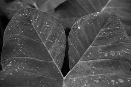 Black and White Leaves  18