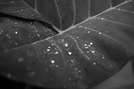 Black and White Leaves 19