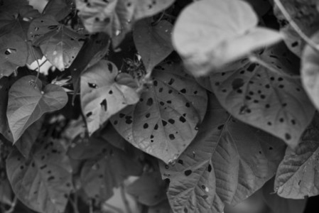 Black and White Leaves  23