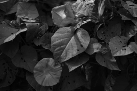 Black and White Leaves 24
