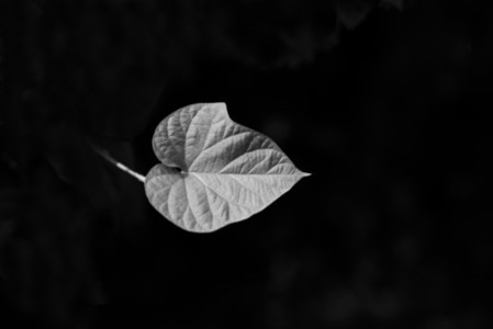 Black and White Leaves 25