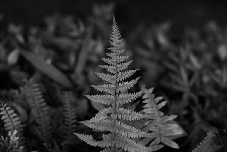 Black and White Leaves  28