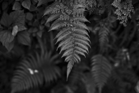 Black and White Leaves 32