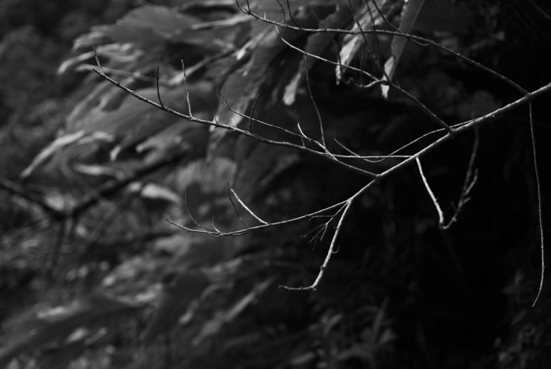 Black and White Leaves  33