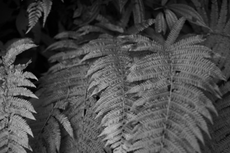 Black and White Leaves  35