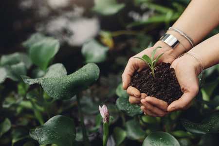 Female gardener hands holding a sapling