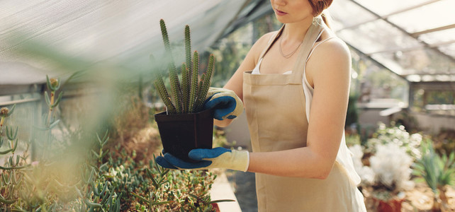 Woman holding a cactus plant in greenhouse