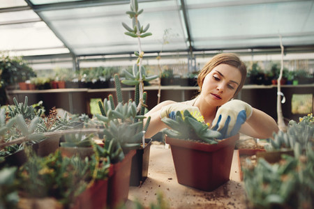 Female worker gardening at greenhouse
