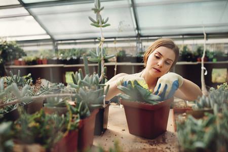Female worker gardening at greenhouse