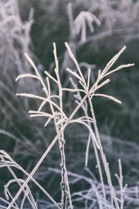 Frozen plants background