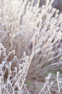 Frozen plants background