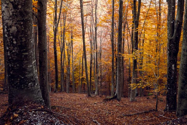 Warm autumn colors