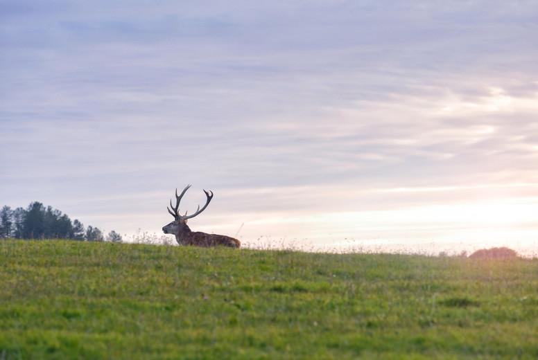 Autumn sunset with deer