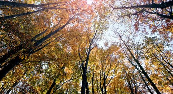 Warm colors foliage during autum