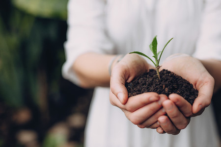 Woman holding seedling in cupped hands