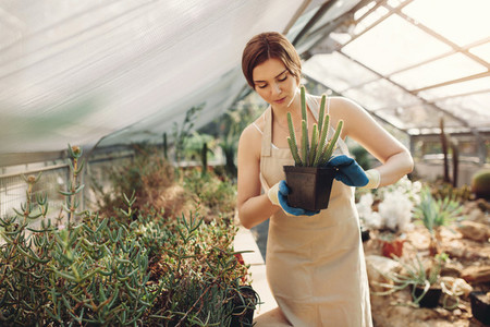 Beautiful gardener with potted cactus at plant nursery