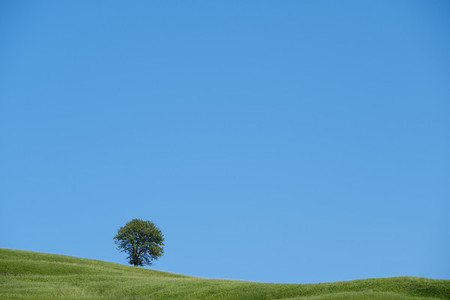 Lonely green tree