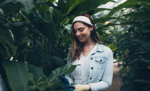 Beautiful woman working in greenhouse