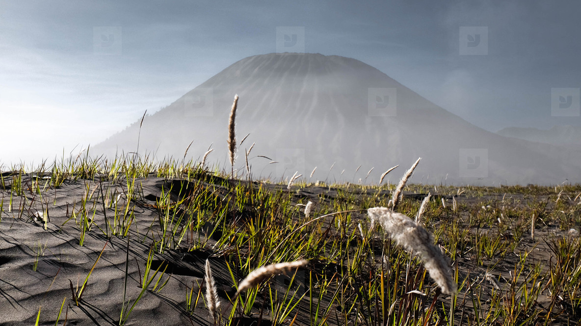 Savana field  Bromo  Indonesia