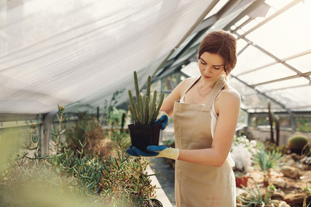 Gardener taking care of cactus plants at greenhouse