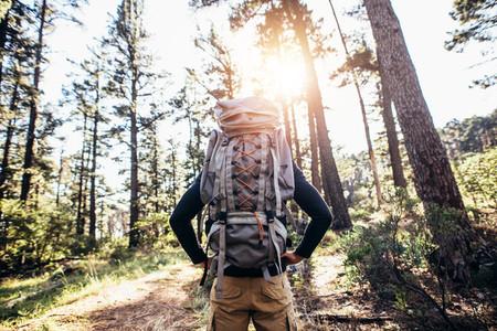 Hiker trekking in forest