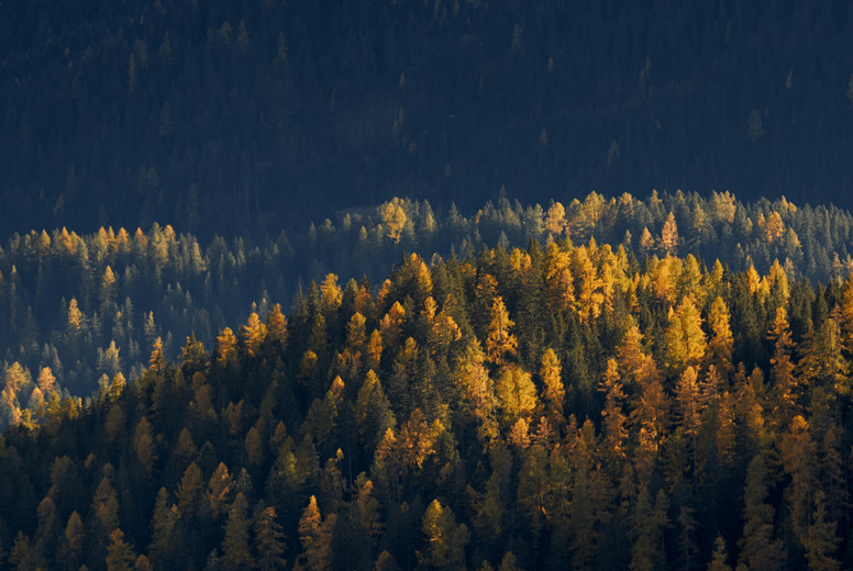 Yellow painted trees