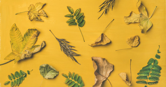 Flat lay of dried yellow and green fallen tree leaves