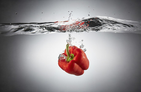 Fresh Food Splash 10