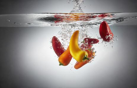Fresh Food Splash 16