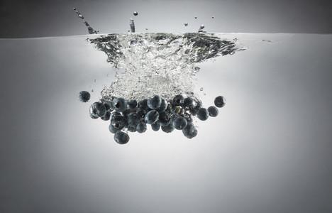 Fresh Food Splash 35