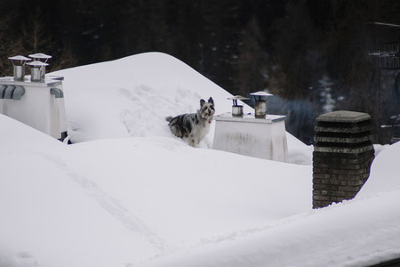 Dog playing on the roof with snow