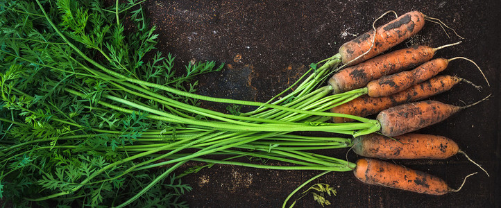 Bunch of fresh garden carrots over grunge rusty metal backdrop