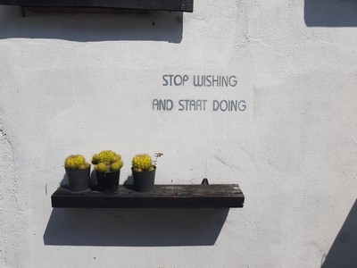 Tree cactus pots