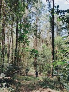 Woman walking in tree forest