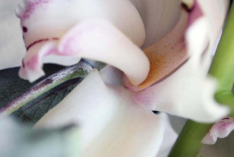Lily petals