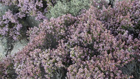 Purple flowered bush